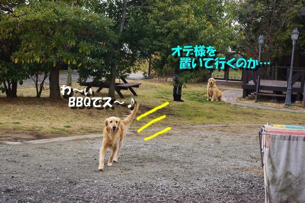 IMGP8048_20110220224747.jpg