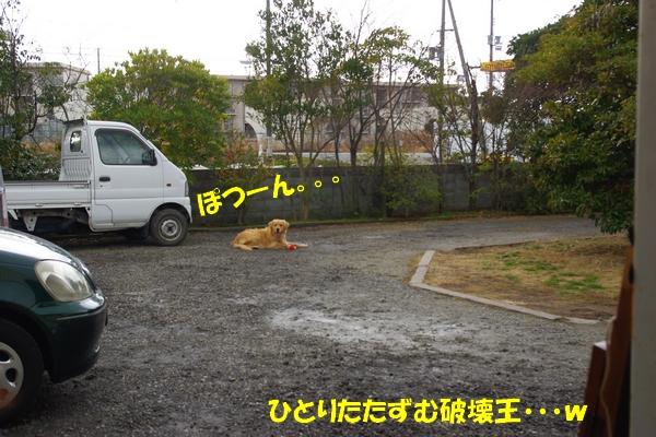IMGP8121.jpg
