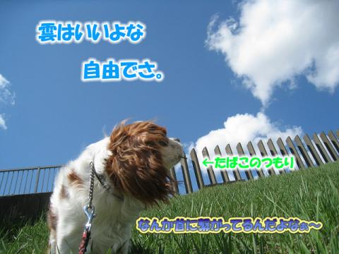 IMG_04280004のコピー