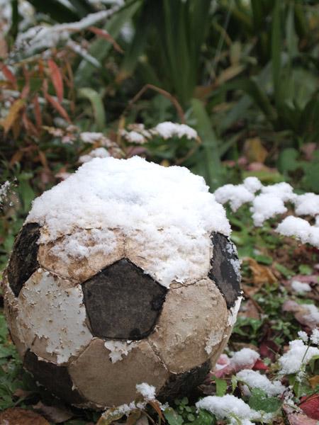 庭のかたすみのボール