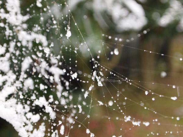 クモの巣に雪