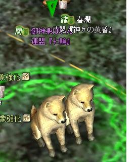 ぱいんさんと犬的2しょっと