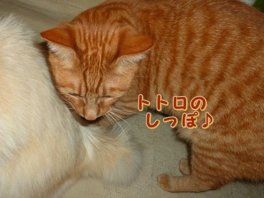 12_20110615101449.jpg