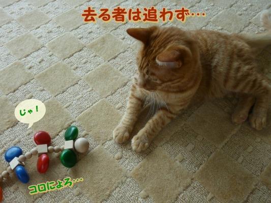 1_20110614085611.jpg