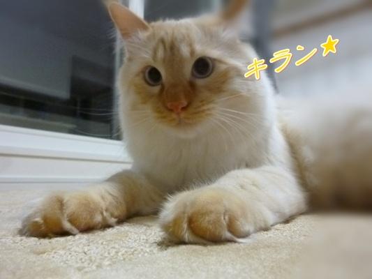 2_20110525102107.jpg