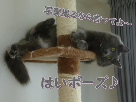 3_20110530120415.jpg