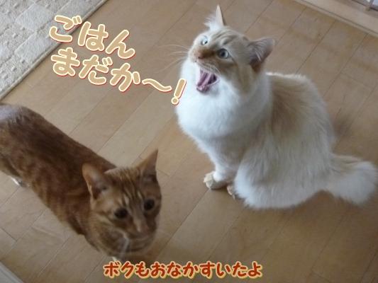 3_20110531095342.jpg
