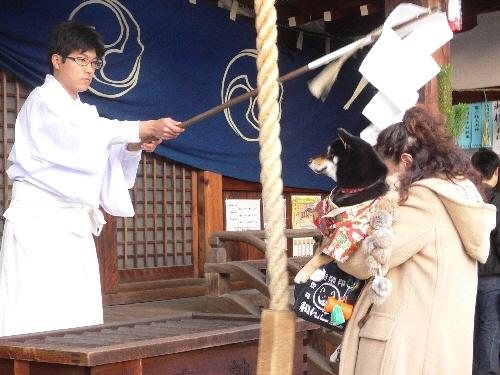 鶴羽根神社2