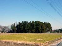 井椋神社 社叢