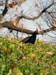 鹿島古墳群の孔雀