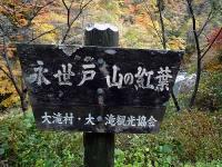 永世戸山の紅葉
