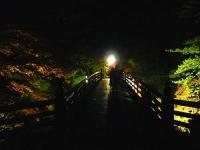 登竜橋ライトアップ