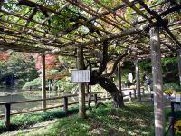 霞ヶ池と智恵子の藤棚