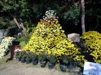二本松の菊富士