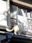 谷中銀座猫