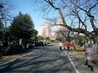 谷中霊園 中央園路