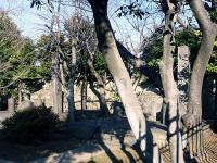 徳川慶喜 長男・敬事夫妻の墓