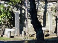 慶喜、子・孫等の墓