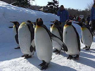 2010 2/11 ペンギンの散歩1