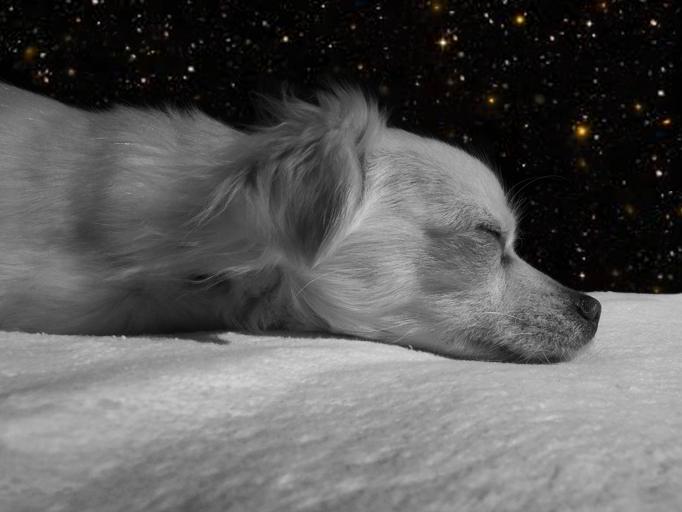 犬の昼寝*