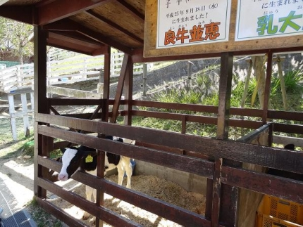 2013年10月六甲山牧場⑤