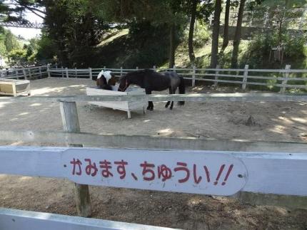 2013年10月六甲山牧場②