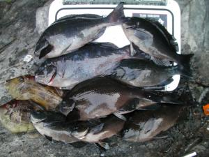 大黒での釣果