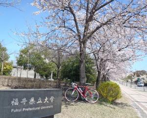 桜11県大