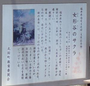 桜13女形谷