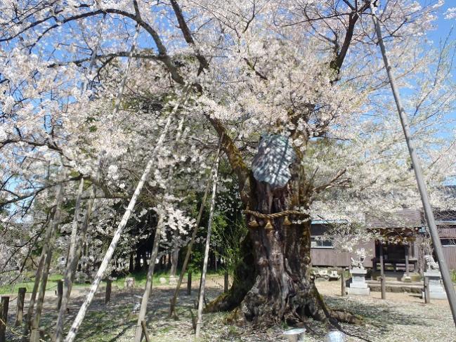 桜14女形谷