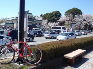桜15丸岡