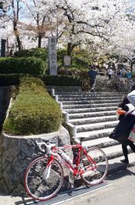桜18丸岡裏