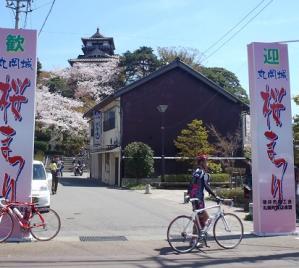 桜19丸岡裏