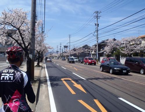 桜20NHK前