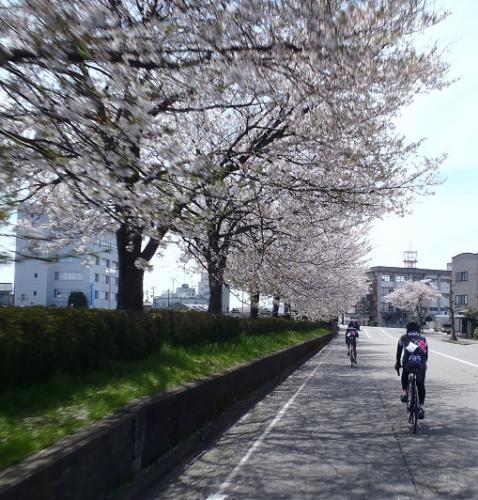 桜21駅裏