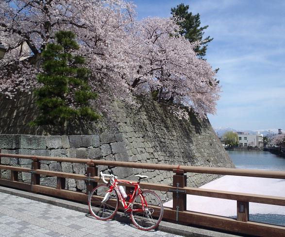 桜25県庁