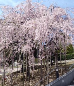 桜28境神社
