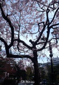 桜30ホテル裏