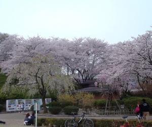 桜33西山