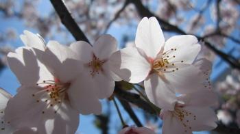 2011_04_13_01.jpg
