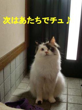 CIMG1417_convert_20100624112458.jpg