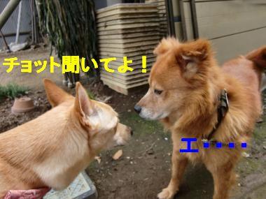 CIMG8326_convert_20100624112046_20100624121809.jpg