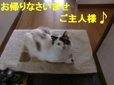 CIMG8471_convert_20100702220941.jpg