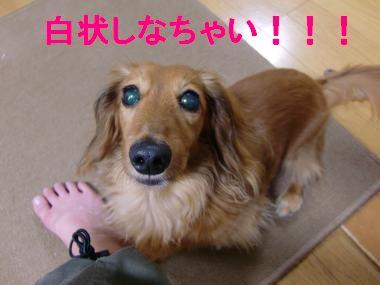 CIMG9057_convert_20100730144642.jpg