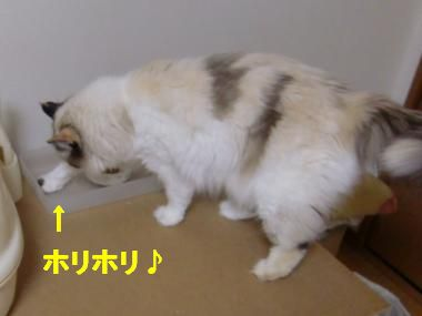 CIMG9839_convert_20100903130605.jpg