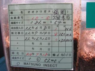 2011.松野5番