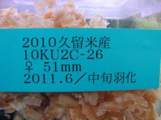 20111(M)