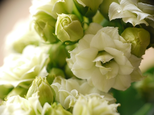 久しぶりの お花♪