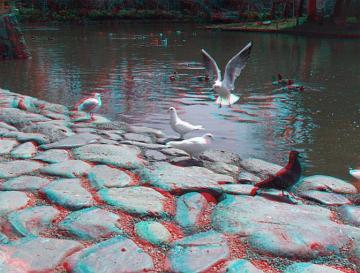 白い鳩は池にいます