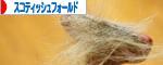IMG_6337-2-27バナー